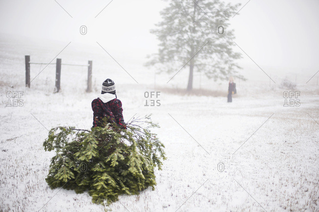 Child pulling Christmas tree with sibling waiting ahead
