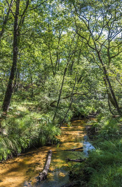France, Landes, Landes de Gascogne Regional Natural Park, Grande Lande ecomuseum in Marqueze, trail in the forest