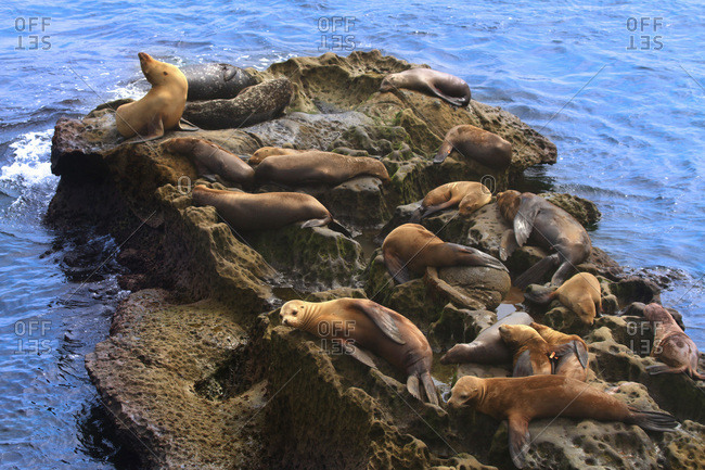 USA, California, La Jolla Cove, seals on rocks