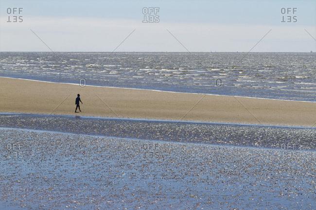 France,Saint-Brevin,  the Loire estuary, a walker at low tide.