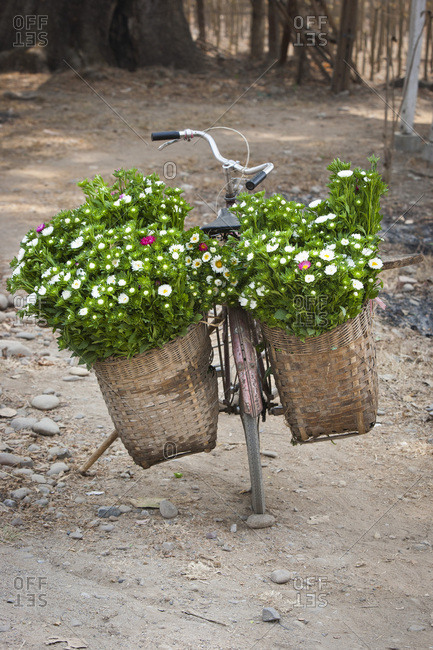 Bicycle loaded with flowers, Hsipaw or Thibaw, Burma