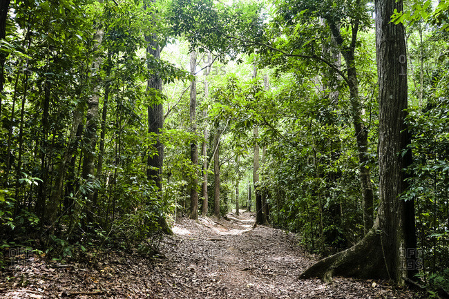 trail in the Montravail's forest, Martinique, France