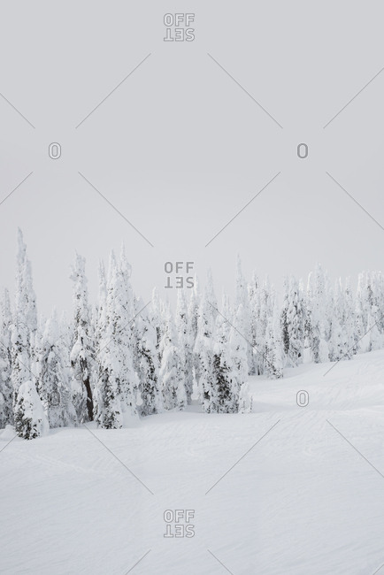Beautiful winter landscape with snow covered trees at dusk