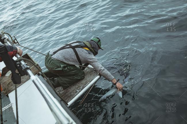 Fisherman leaving shark in sea from boat