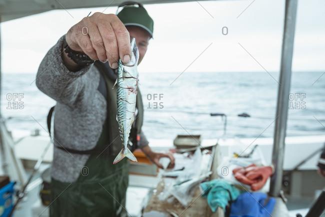 Fisherman holding fish on boat