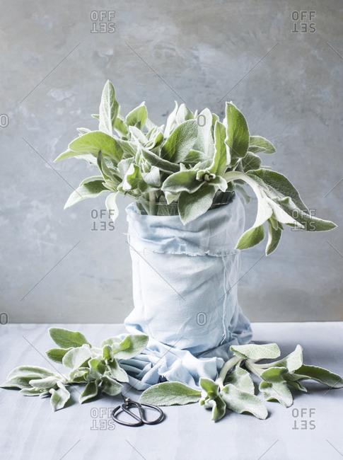 Bouquet arrangement