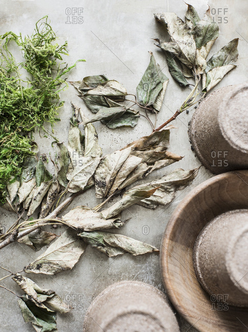 Close-up of pots and dried leaves on a branch