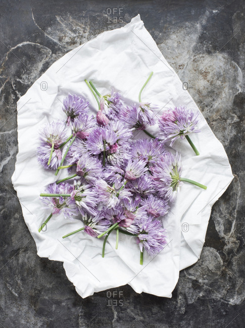 Cut chives flowers on a white cloth
