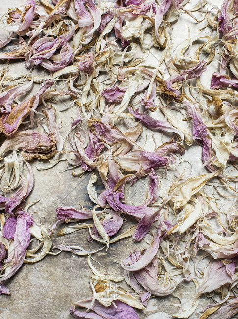 Dried flowers petals in close up
