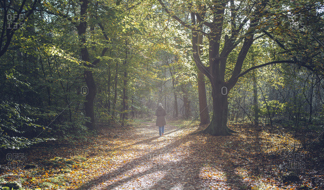 Woman walking on misty forest path in autumn.