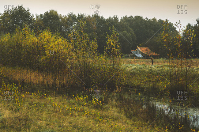 Shed in dutch rural landscape with yellow colored autumn trees.
