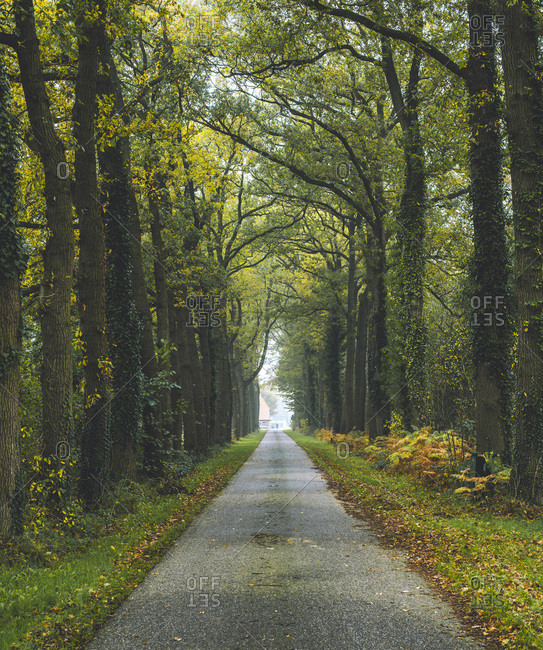 Country road in autumn forest with yellow colored trees.