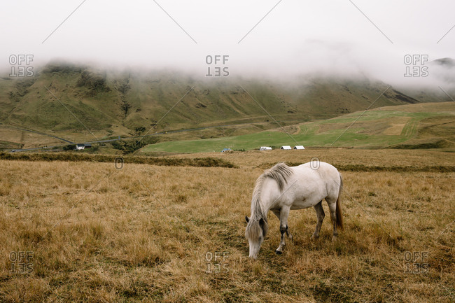 Horse grazing in rural Iceland