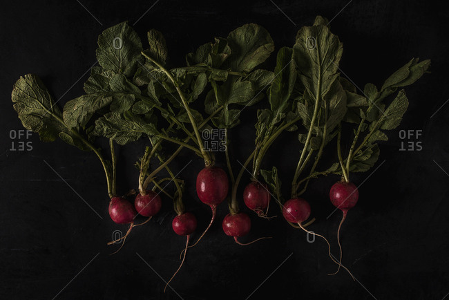 Red radishes on a dark background