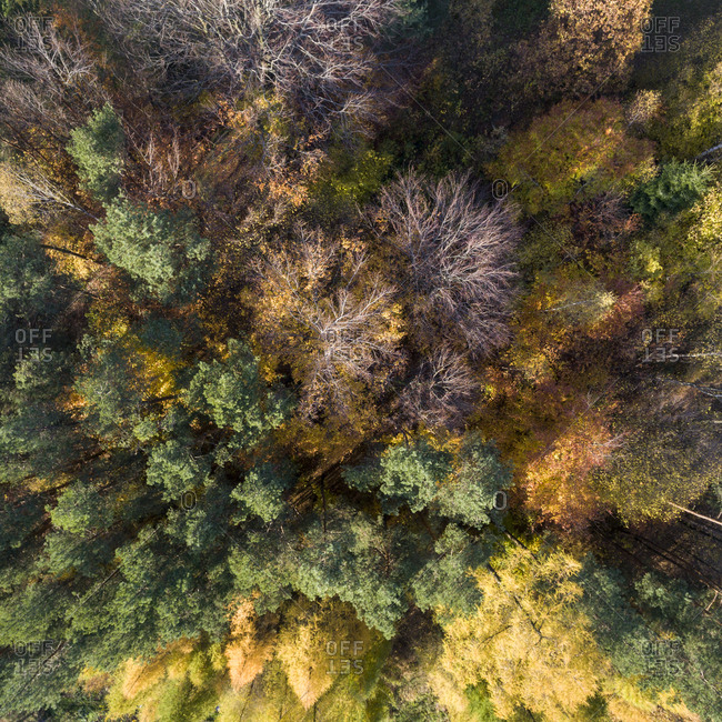 Aerial view of a colorful autumn forest