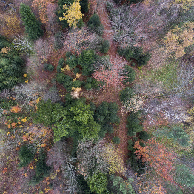 Colorful autumn forest from above
