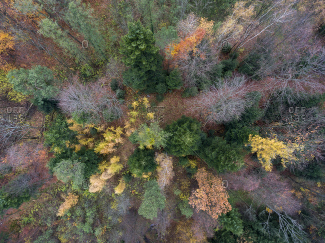 Colorful fall forest from above