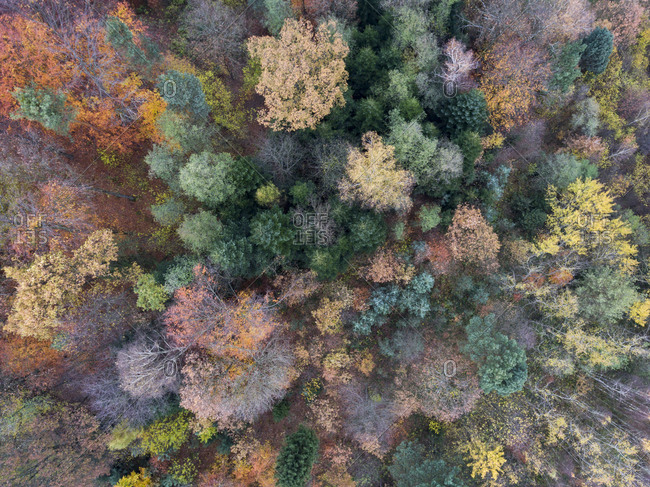 Aerial view of a colorful fall forest