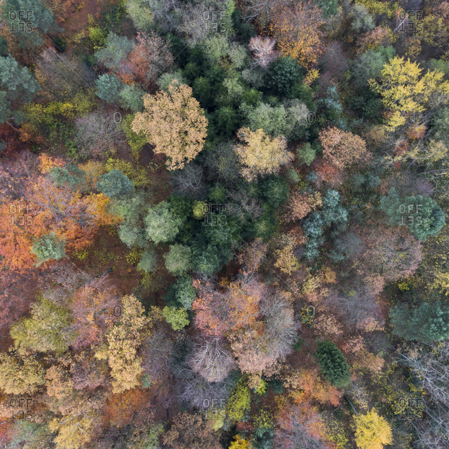 Bird's eye view of a colorful fall forest
