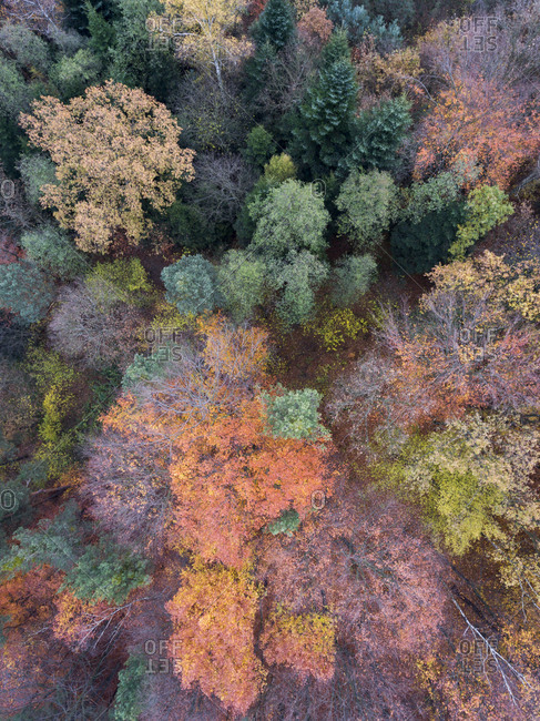 Aerial view of a fall forest