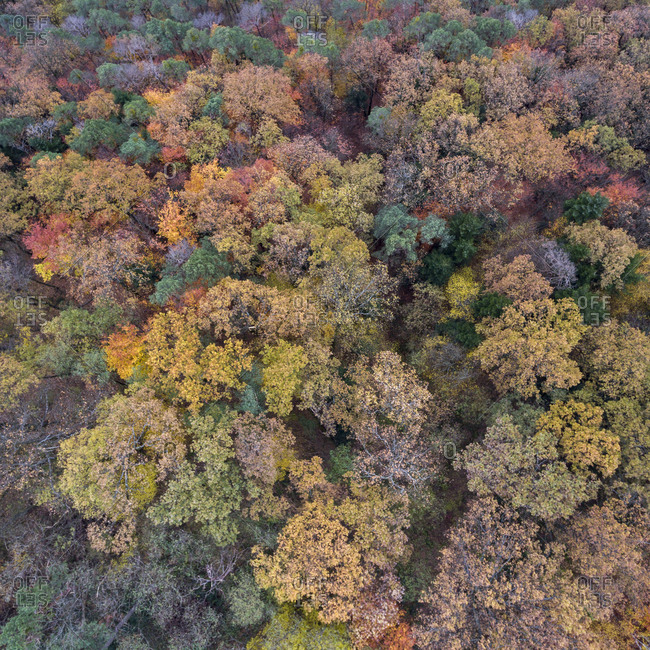 Aerial view of a lush fall forest