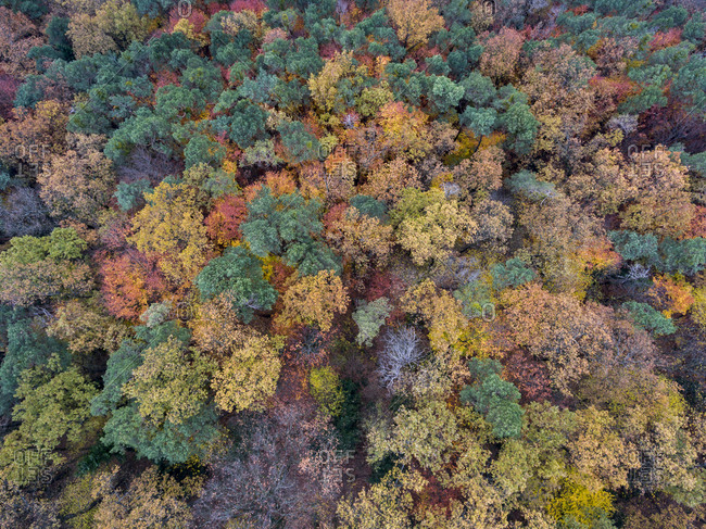 View of a lush autumn forest from above