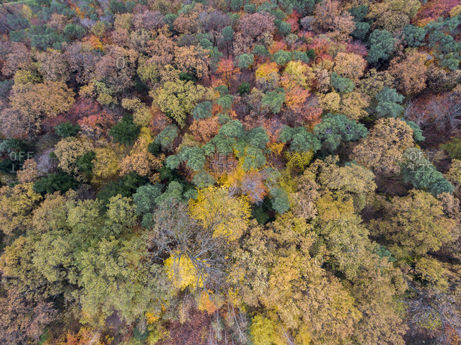 Aerial view of a lush autumn forest