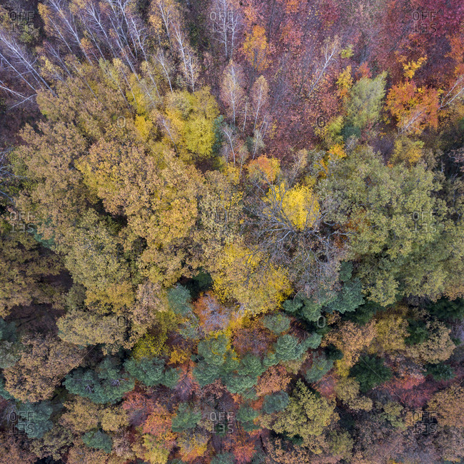 View of a colorful forest in autumn from above
