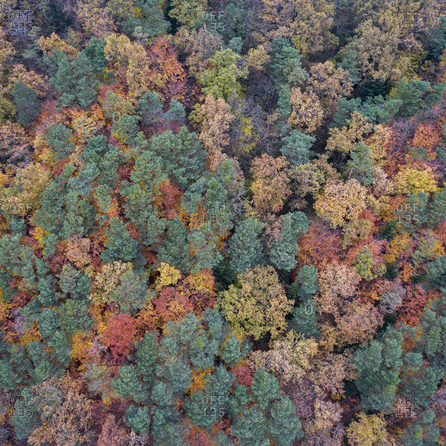 View of a lush fall forest from above