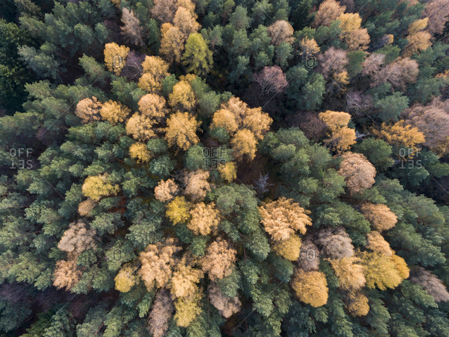 View of a colorful forest in fall from above