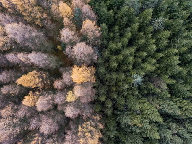 Dense forest in fall from above