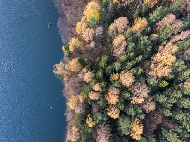Aerial view of a colorful autumn forest beside blue water