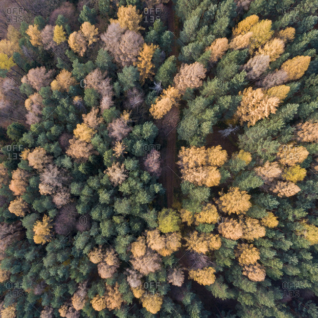 Aerial view of road running through autumn forest
