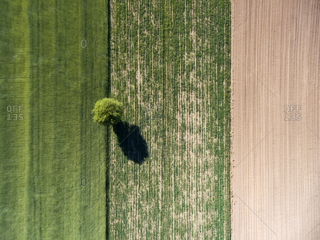 Aerial view of farm field with a single tree