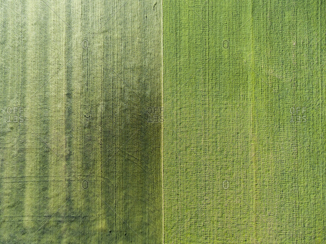 Aerial view of green farm fields