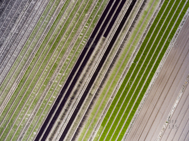 Aerial view of striped agricultural fields
