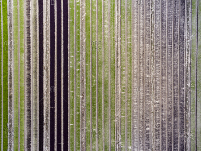 Aerial view of agricultural fields with rows