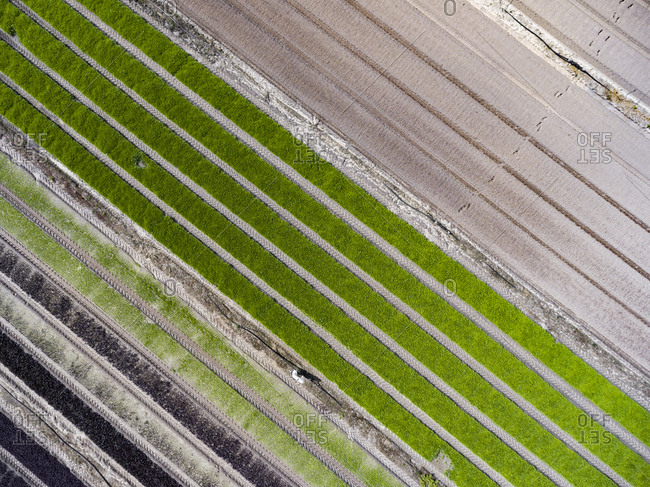 Aerial view of striped agricultural fields with tire tracks