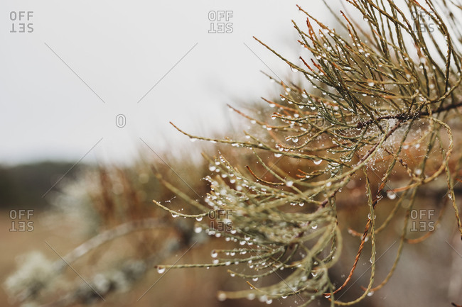 Dew drops on plant - Offset