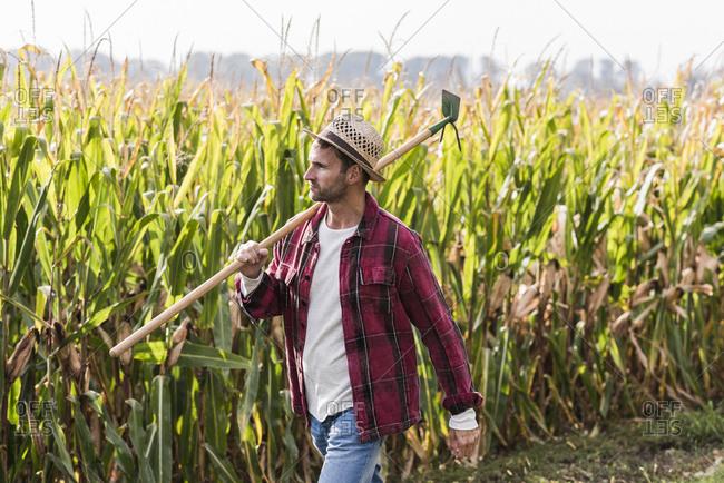 Farmer walking along cornfield
