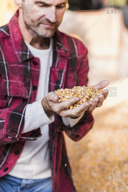 Farmer with grains of maize in hand