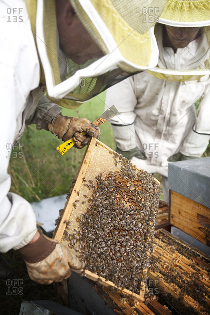 July 8, 2015: Reportage on a beekeeper in Haute-Savoie, France, who produces organic mountain honey. Arnaud has 250 bee hives managed organically.