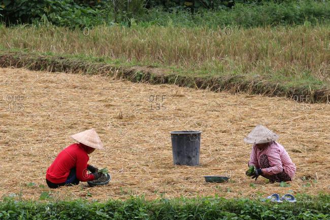 November 3, 2015: Lao Farmers Working in rural field