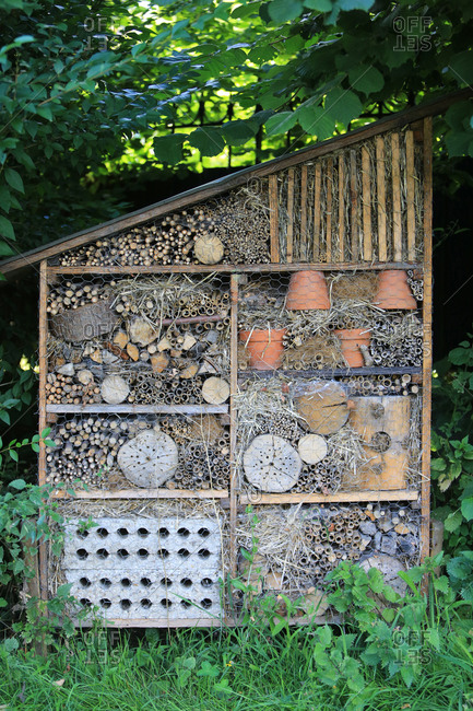 Insects Shack