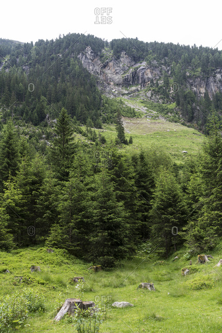 Verdant landscape in the Austrian Central Alps