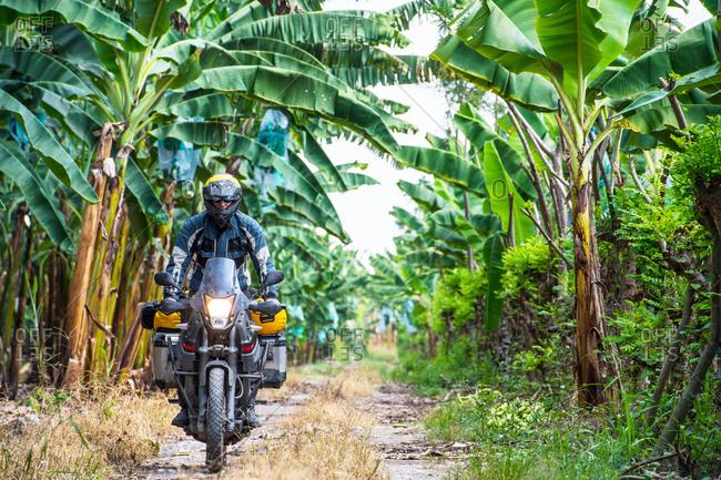 Man riding touring motorbike through banana plantation, Machala, El Oro, Ecuador, South America