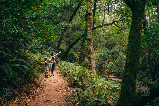 Woman and sons in forest, Fairfax, California, USA, North America