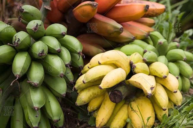 Bananas for cooking, close-up, Birayi, Bujumbura, Burundi, Africa