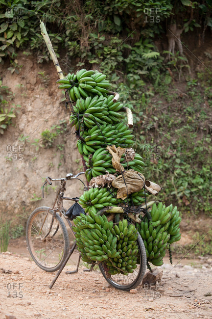 Bicycle on dirt track stacked with bunches of bananas, Masango, Cibitoke, Burundi, Africa
