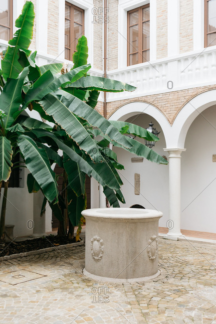 Courtyard with tall palm trees in Senigallia, Marche, Italy